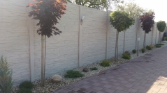 Krémový probarvený betonový plot kolem okrasné zahrady